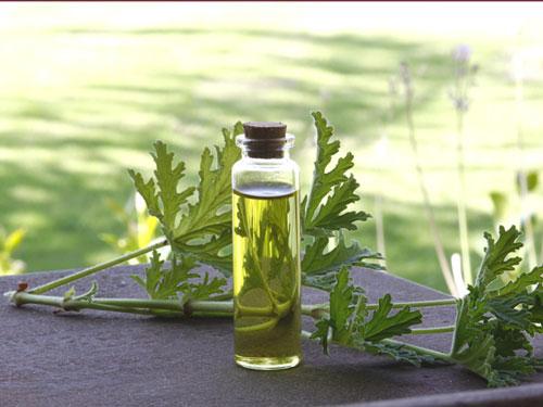 essential natural oil